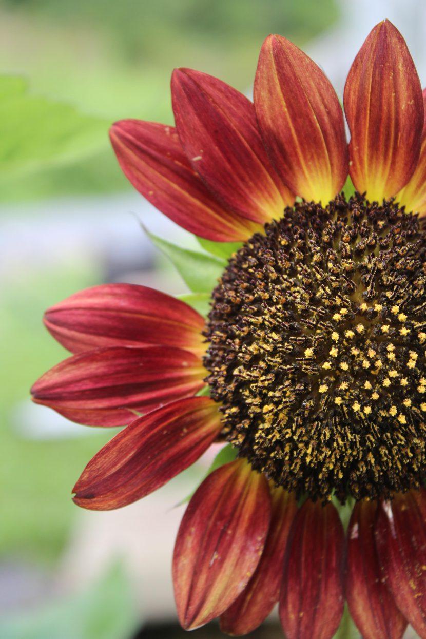 BlumeMitFehlendenBlättern